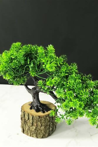 - Kütükte Bonsai Ağacı